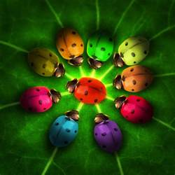 ladybug colors rainbow bugs picture by divair for bug photoshop