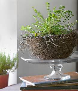 unique indoor planters unique indoor plant containers