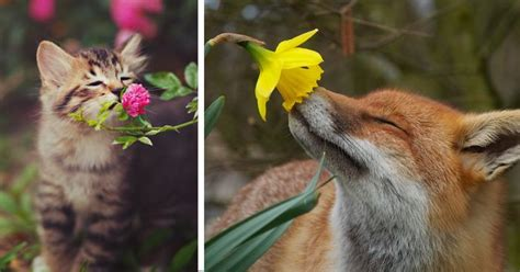 Home Design App On Love It Or List It Animals Sniffing Flowers Is The Cutest Thing Ever 15