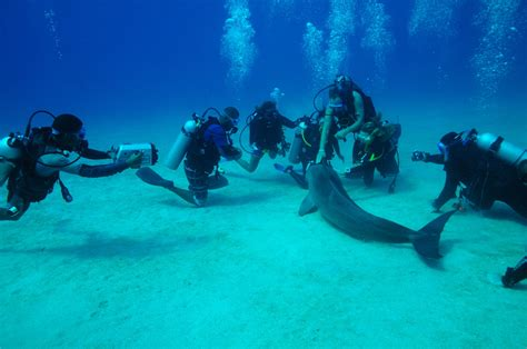 roatan dive 6 cheap diving destinations for the budget diver
