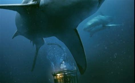 47 meters to feet 47 meters down 2017 hnn