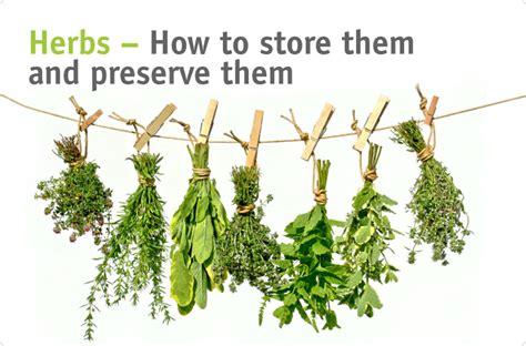 tow 6 how to store fresh herbs active vegetarian