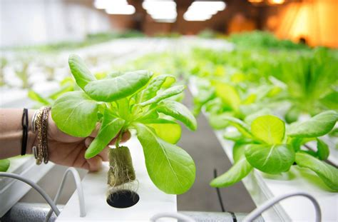 omahas  commercial enclosed hydroponic garden