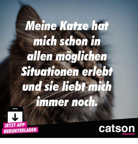 katze hat immer weichen stuhl 25 best memes about allen allen memes