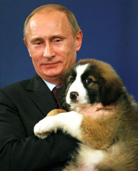 putin puppy vladimir putin cuddles with a puppy