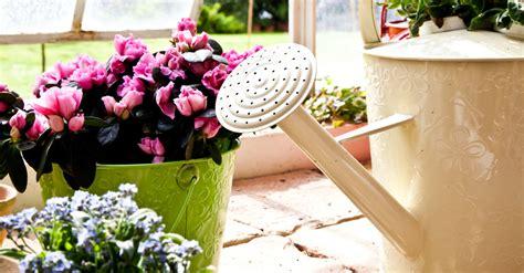 cuidados de las plantas de interior cuidados de las plantas de interior verdecora