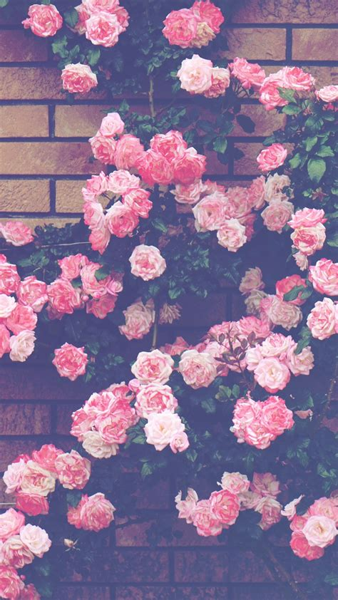 Decke Weißt Du Eigentlich Wie Lieb Ich Dich Hab by Die 74 Besten S 252 223 E Eulen Hintergrundbilder