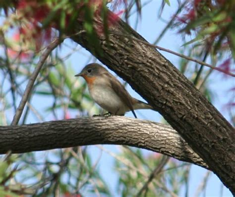 less common birds of iit kanpur and north india