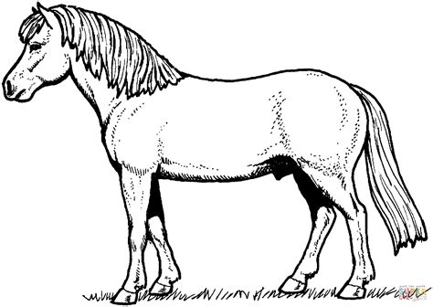 Coloring Of Horses by Coloring Pages Horses With Gallery Of Appaloosa