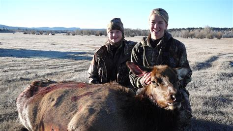 Elk Hunt Sweepstakes - new mexico elk hunt sweepstakes the timbers at chama