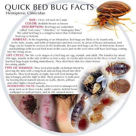 how long do bed bugs live without blood arizona pest control services specializing in termite