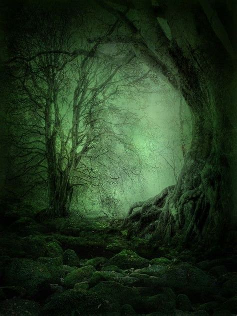 deep forest green deep forest nature nature spirits pinterest the land