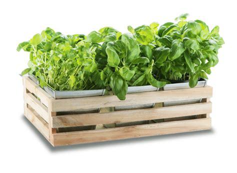 Herb Planter Windowsill by Kitchen Herb Windowsill Planter Box With 6 Steel Pockets 163