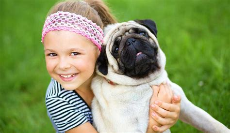 are pugs with children pugs and children pugs purely pugs