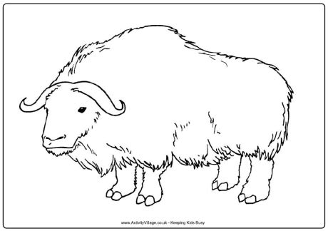 ox colouring page 3