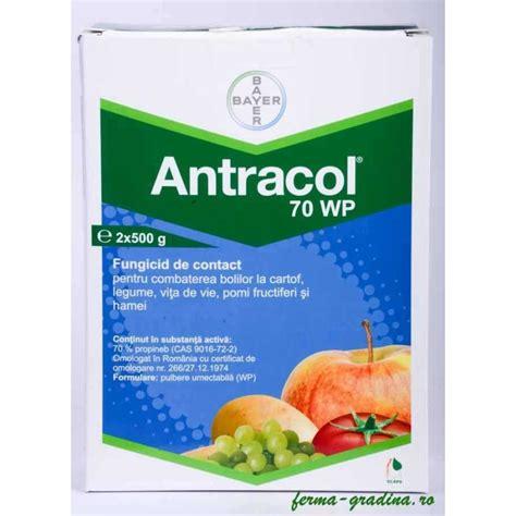 Antracol 1kg fungicid antracol 70 wp 20 g 200 g 1 kg mana patari alternarioza ferma gradina ro