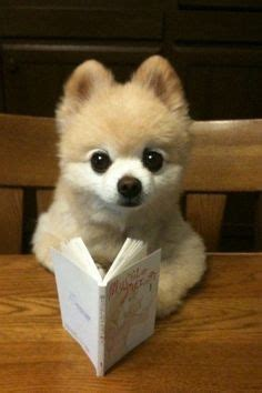 cutest puppies book 1000 images about cats and dogs reading on reading to read and cats