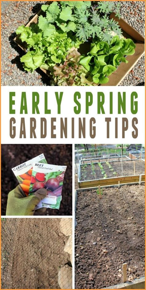 Vegetable Gardening In The Pacific Northwest 34 Best Pacific Northwest Gardens Images On