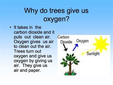 planting trees how do trees make oxygen