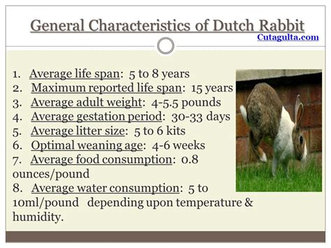 new year rabbit characteristics the rabbit by cutagulta ppt