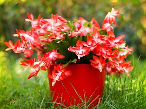 www piante da appartamento piante da appartamento le 8 migliori per la nostra casa