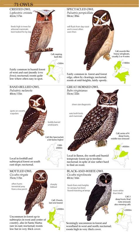 field guide to the birds of colombia miles mcmullan