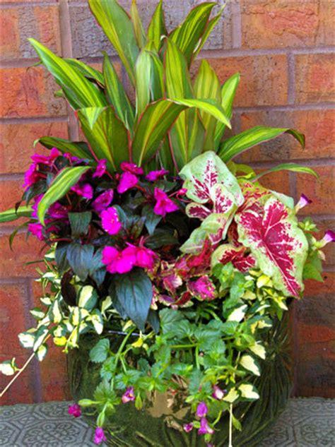 container gardens for shade 25 container garden ideas the scrap shoppe