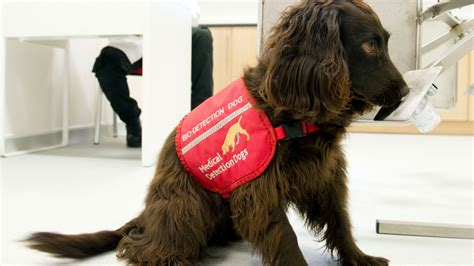 dogs detect cancer detection dogs these dogs can detect cancer easyfundraising org