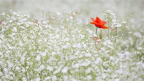 kata kata mutiara tentang bunga  membuat terpana