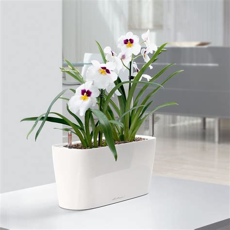 self watering indoor planters lechuza windowsill self watering indoor planter planters