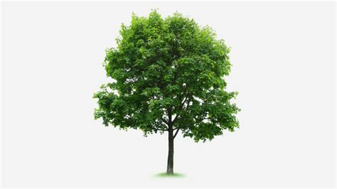 define tree a tree grows in mutual funds does the name define the