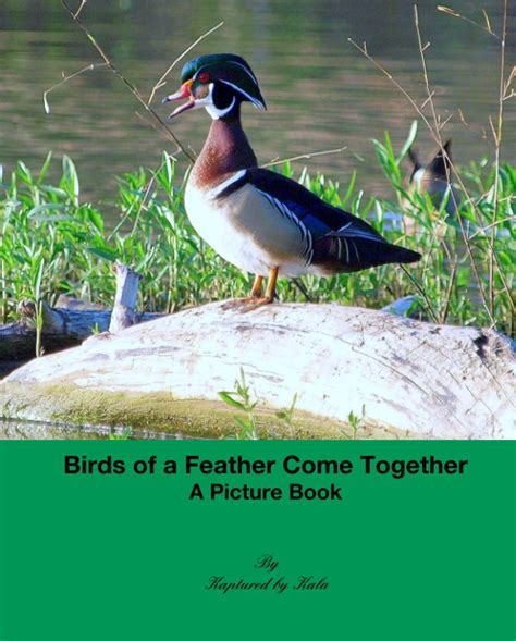 birds of a feather come together a picture book by