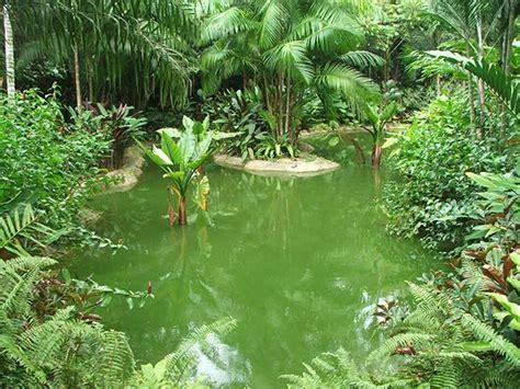 plants in singapore botanic gardens meet singapore s plants