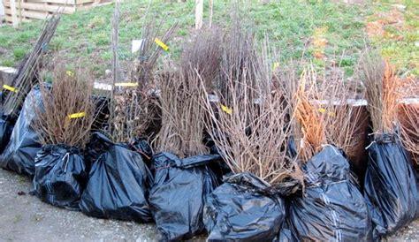bare root trees  shrubs tis  season