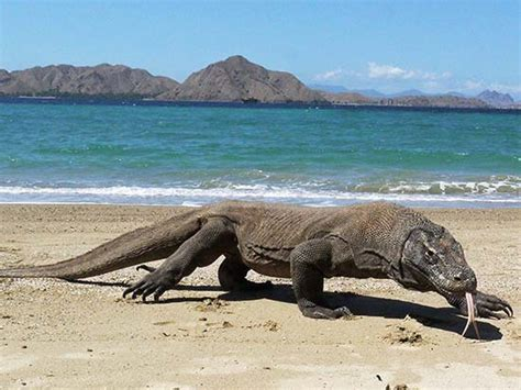 komodo national park world heritage site   wonders