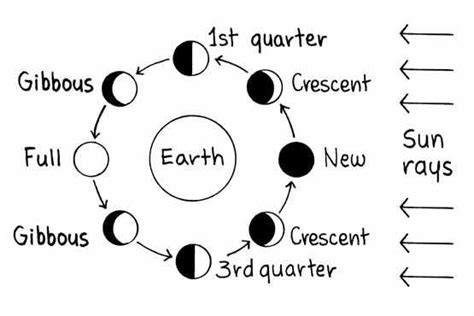 phases of the moon diagram to label draw moon phases of the label images diagram writing
