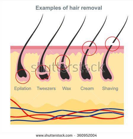 wax types diagram exles of hair removal waxing tweezers