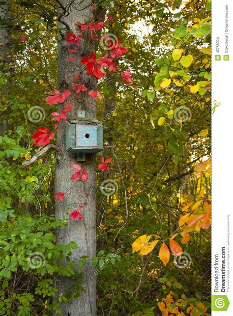 blue bird house surrounded by leaves in fall colors stock photo image 45768024