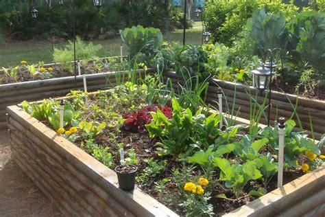spring gardening   vegetables  plant  spring