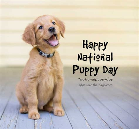 happy national puppy day national puppy day 2016 in between the blinks