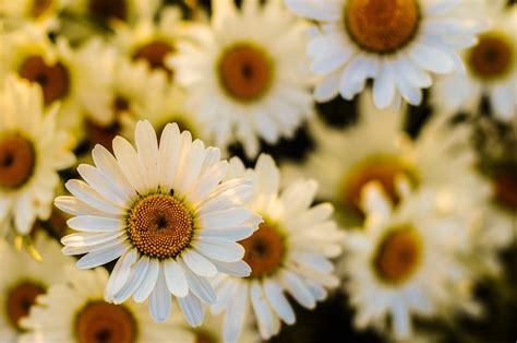 foto bellissime di fiori primavera musica rilassante diprimavera con bellissime