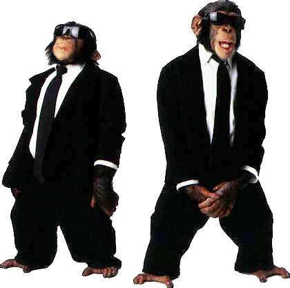 monkeys in sunglasses (and suits) | animals with sunglasses