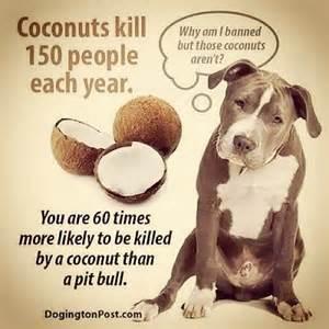 Are pitbull memes doing more harm than good thatmutt com a dog