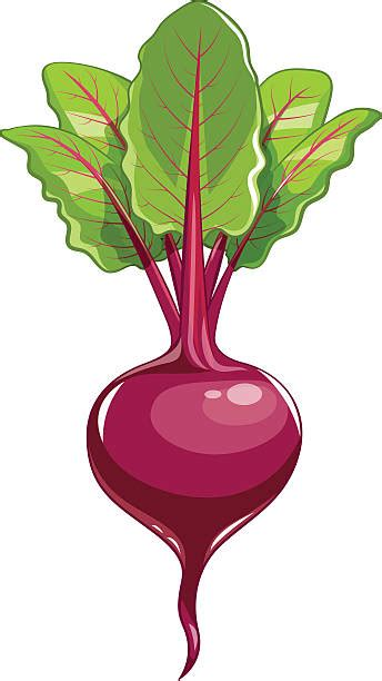 beet clipart royalty free beet clip vector images illustrations
