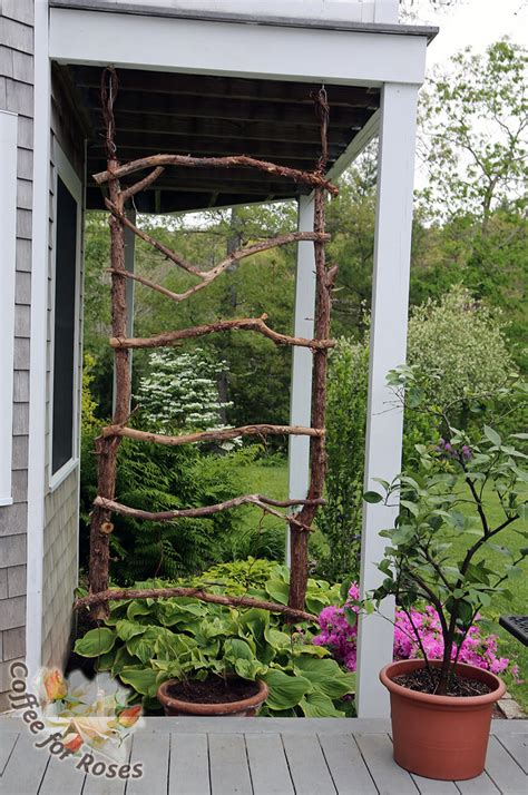 trellis garden ideas 24 best diy garden trellis projects ideas and designs