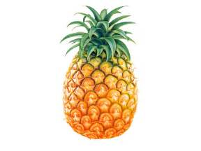 yellow pineapple colors photo 34691579 fanpop