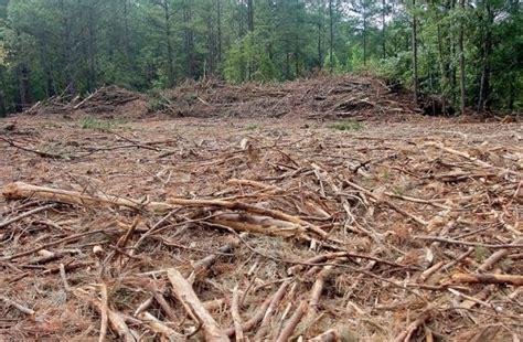 Metode Al Bana deforestation cutting of wood