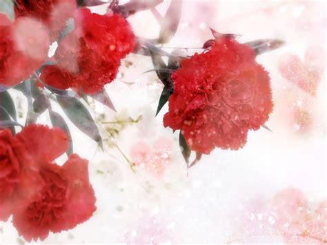 imagenes de flores para mi amor image gallery imagenes de flores romanticas