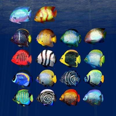 Indecent Tropical Fish Vol 2 tropical fish 7 3d model tropical fish 7 by inventerion