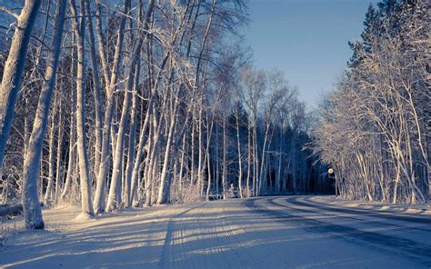 nature snow winter tree road cool shadow background